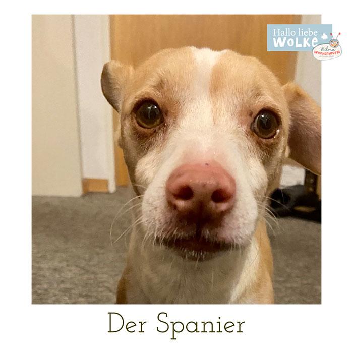 Haustiere-für-Kinder-Strassenhund-Spanien-auf-den-Hund-gekommen-Susanne-Bohne-Hallo-liebe-Wolke-Wilma-Wochenwurm