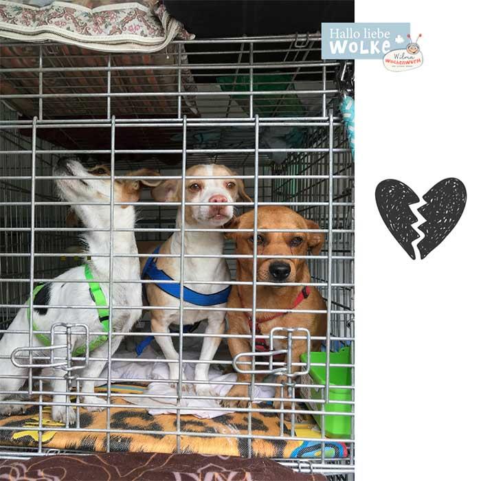 Haustiere-für-Kinder-auf-den-Hund-gekommen-Susanne-Bohne-Hallo-liebe-Wolke-Wilma-Wochenwurm-Mito-Tiertransporter