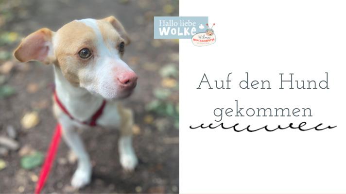 Haustiere für Kinder auf den Hund gekommen Susanne Bohne Hallo liebe Wolke Wilma Wochenwurm