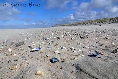 Strandschätze eine Geschichte für Kinder im Sommer_Vorlesen_Urlaub Ferien Meer Strand Sand Muscheln Freebie Hallo liebe Wolke Wilma Wochenwurm