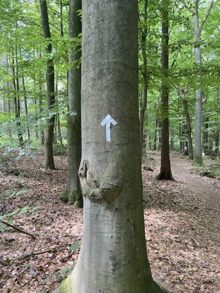 Wilma Wochenwurm Waldschatzsuche Pfeil Schnitzeljagd Kinder Natur Sommerferien